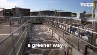 Супербактерията, която пречиства водите