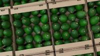 Манията по здравословно хранене доведе до бум в консумацията на авокадо