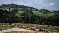 Война на лобита се води в Европейския парламент, заради новата земеделска политика на ЕК