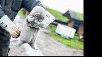 Европейската кожухарска промишленост е в риск след мерките във фермите за норки