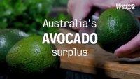 Свръхпредлагане на австралийско авокадо