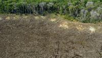 Апетитът на ЕС е отговерен за обезлесяването на голяма част от Земята