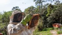 Как умните технологии помогат за спасяването на пчелите по света?