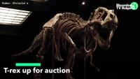Christie's продава тиранозавър