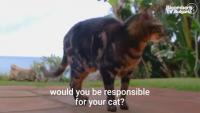 Тайната плячка на котките, част 3