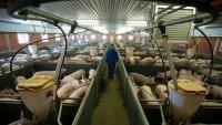 Британските супермаркети остават без основни меса